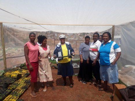 food-garden-seedlings-e1566227518103