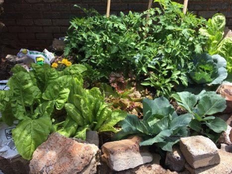 food-garden-success-r-e1565623011476