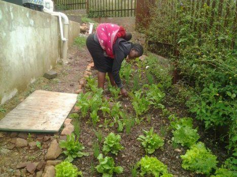 food-gardening9-e1566227556205